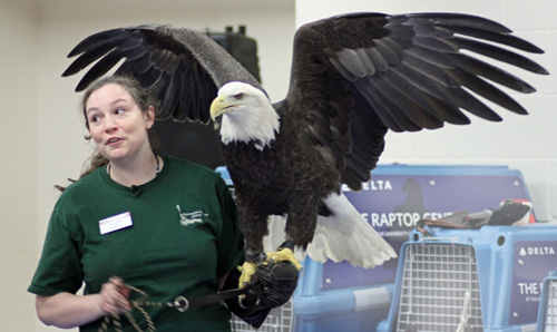 Bald Eagle shown at the Family Education Day event.
