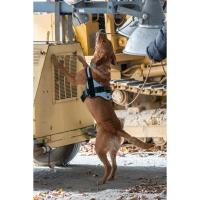 CBMM to host K-9 Nose Work event