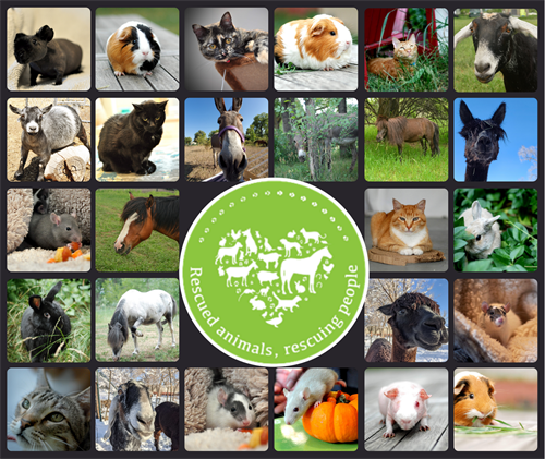 Gallery Image AATPC_Animal_Collage.png
