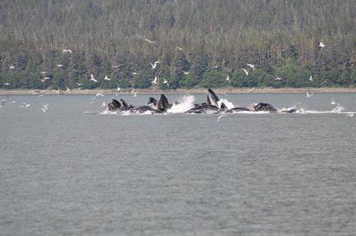 Whale Watching on our Alaska Cruise