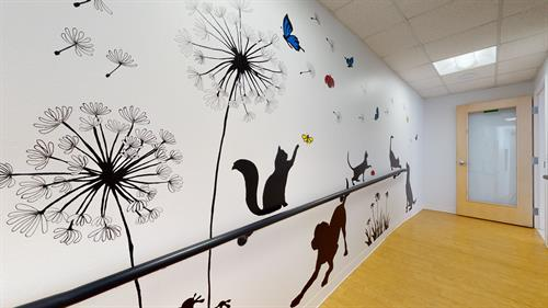 Gallery Image Five-Parks-Animal-Hospital-01182021_163809.jpg