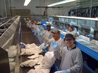 Sort team sorting soiled linen to be washed.