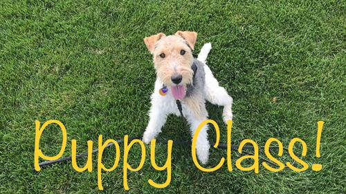 Puppy Classes Available!
