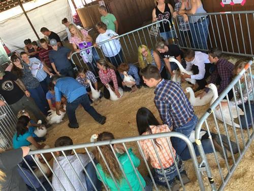 Laramie County Fair 4H Market Goose Show