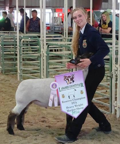Laramie County Fair FFA Market Sheep Show