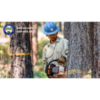 CCC Newsletter - Forestry Corps