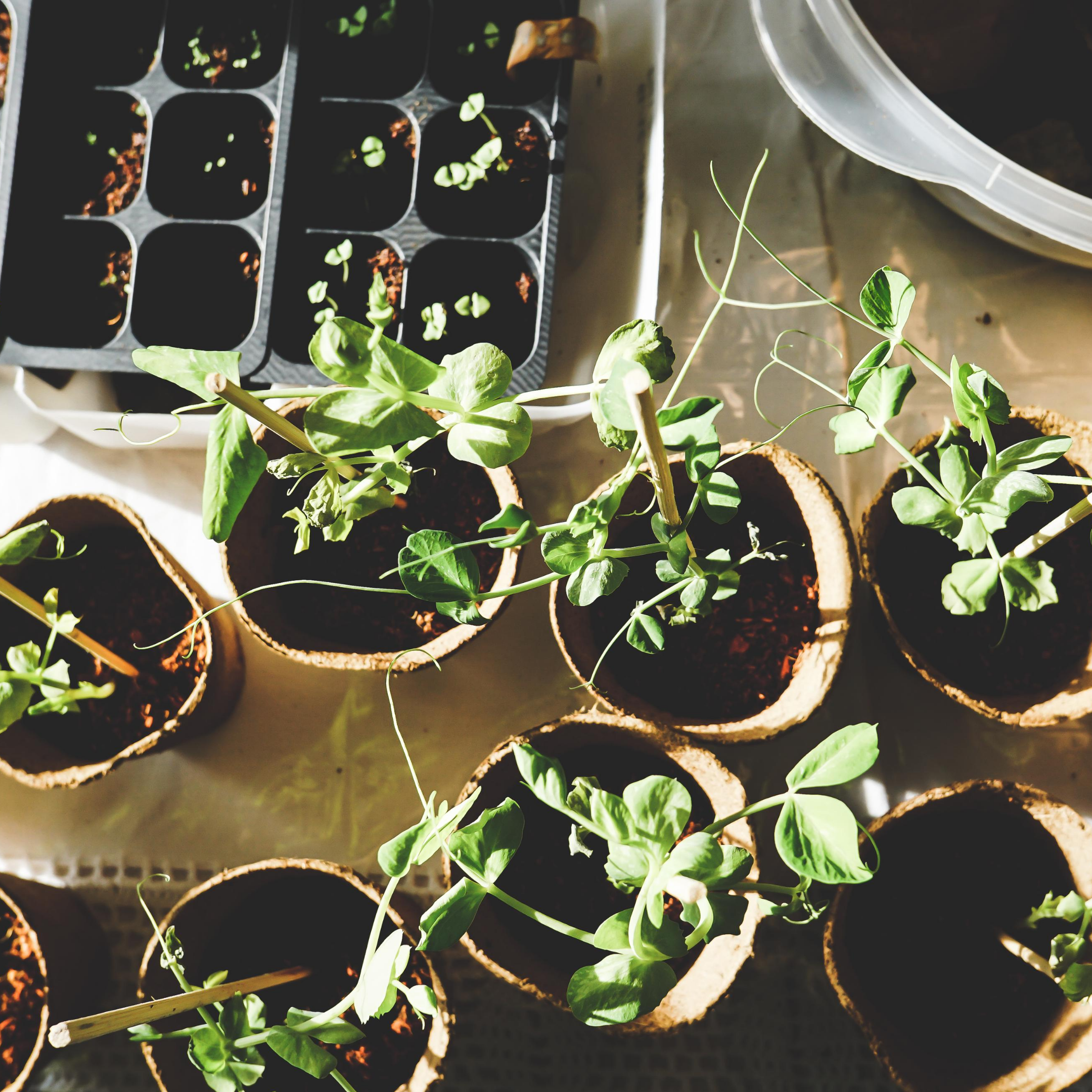 An Urban Agriculture Revival