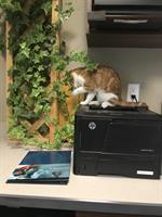 Gallery Image Cat_pic1.JPG