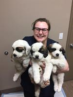 Gallery Image Pups.JPG
