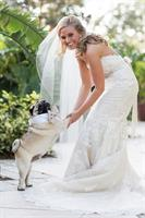 Wedding Day Dogs