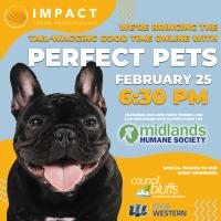 Impact CB: Perfect Pets