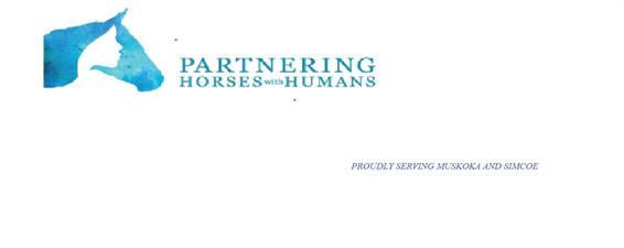 Equine Assisted Learning - Learning with Horses as Teachers