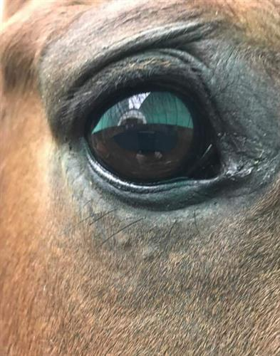 Sometimes Answers Can be Found by Looking into a Horses Eye