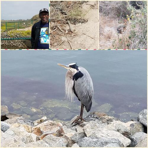 Marine Biology field = featuring Blue Heron