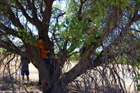 climbing a tree is a fun way to hang out at a camporee
