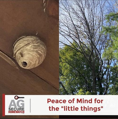 Wasp nest, a dead tree over the garage...some of the little thing we catch on our visual inspections.