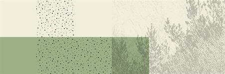Wild + Pine Ltd.