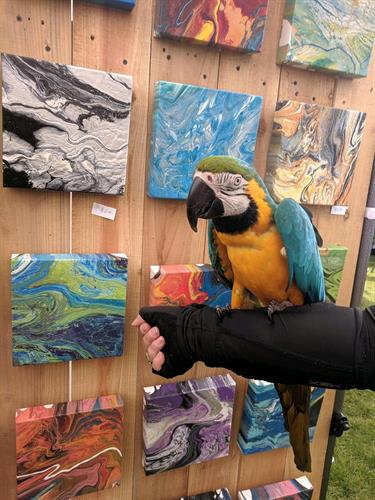 Macaw visiting my booth last summer
