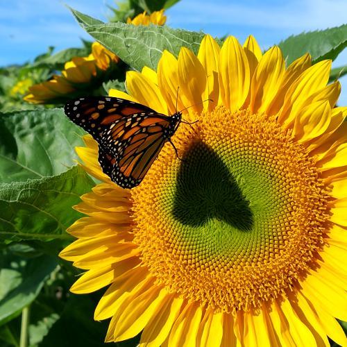 Gallery Image butterfly500x500.jpg