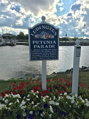 Ludington Petunia Parade