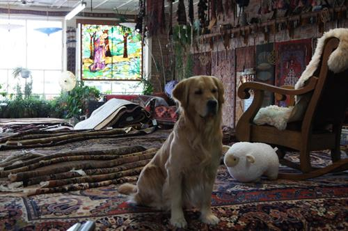 Come meet DUDE the DOG, Our resident rug inspector....'free cat scans'...