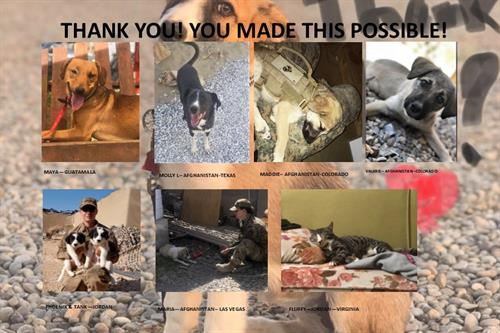 2019 Fundraiser Event Rescues.Their expenses were paid from the proceeds of the Fundraiser!