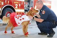 First POPP Pup Parade at  POPPtoberfest in Georgeton TX