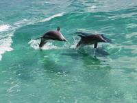 Gallery Image Dolphin_Pod2.jpg