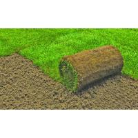Sod vs. Grass Seed for New Lawns