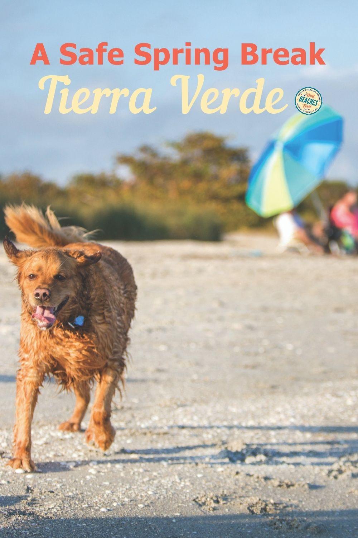 Image for A Safe Spring Break in Tierra Verde, Florida