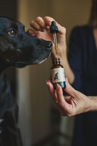 500 Mg THC Free Hemp Extract Pet Tincture