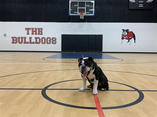 Gallery Image HOME_of_the_BULLDOGS.JPG
