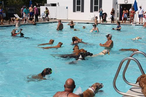 Doggie Swim To Benefit The Worcester County Humane Society Sep 9 2017 Ocean City Md