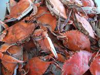 We're just a stroll away from Crisfield's famous steamed crabs served in waterside restaurants and downtown shopping.