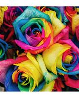 Uniquely dyed rose options!