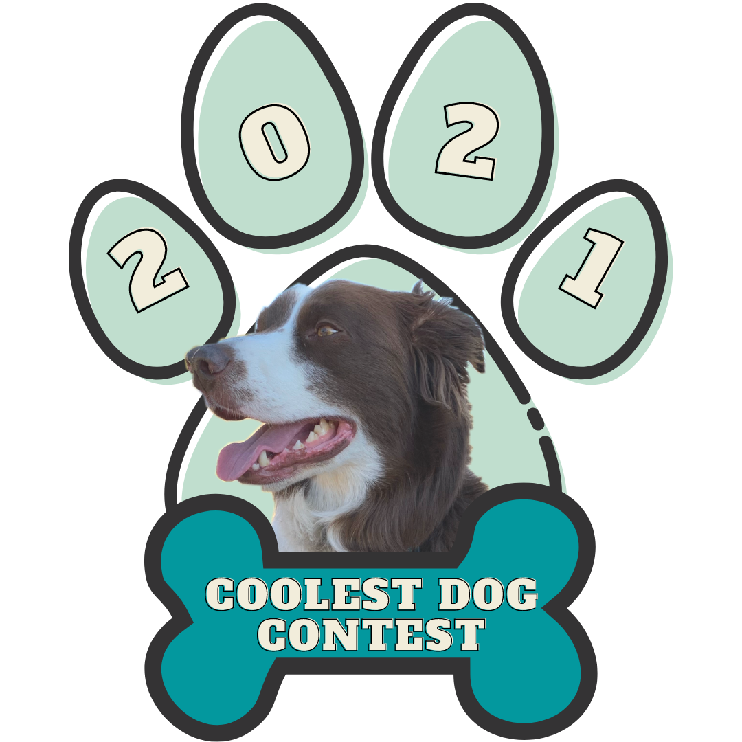 Image for Coolest Dog Contest