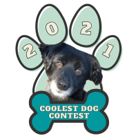 Coolest Dog Contest Award Ceremony