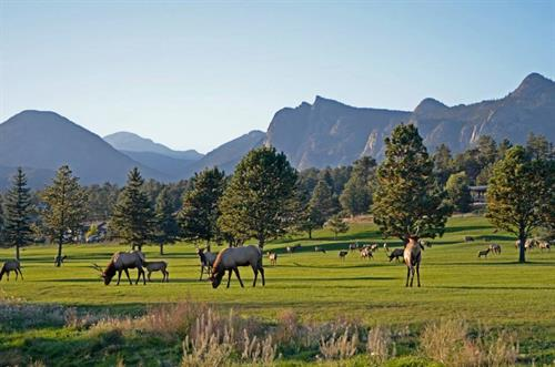 Gallery Image Golf_course_elk.jpg