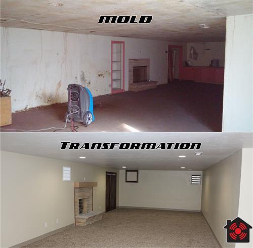 Gallery Image mold_transformation.jpg