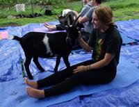BABY GOAT YOGA SUNDAYS