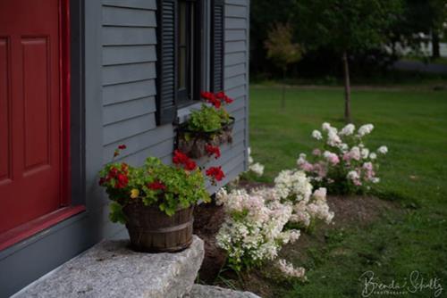Kitchen back door to garden