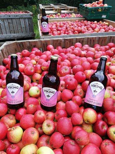 Viking Irish Harvest Blush Cider among the Katy apples