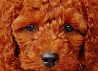 www.bigskydogtraining.com