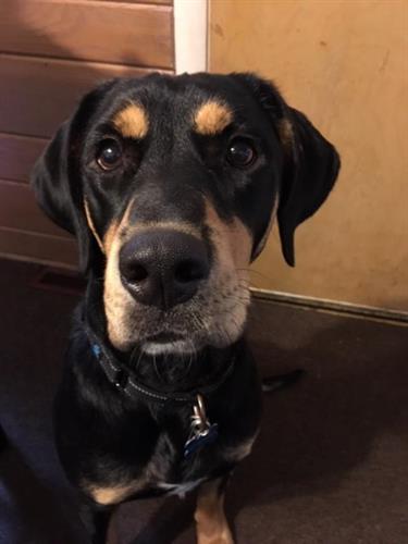 Finn - Montana's Dog