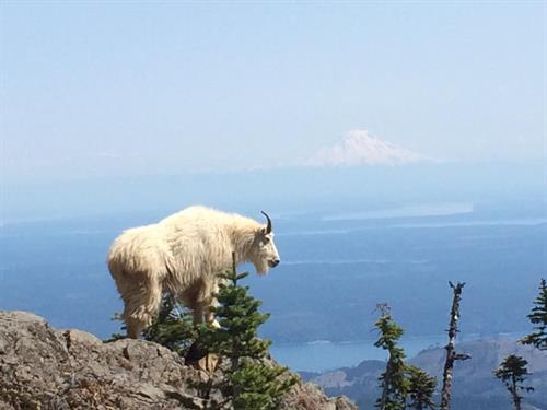 Hiking and recreation packages for the Hood Canal region