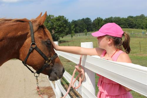 Learn to ride at our annual horse camp!