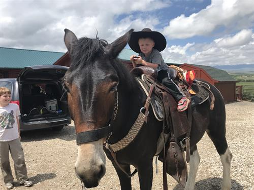 A young cowboy  on Buddy, he likes kids.