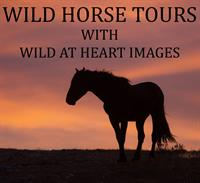 Wild Horse Photo Tours with Wild at Heart Images