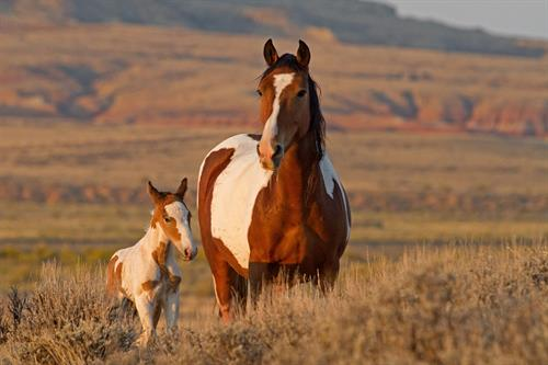 The mare, Ruger, and her newborn foal, Rebel, greet the day.