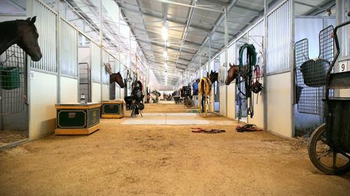 Gallery Image Live_Racing_Barn_Stalls_-_Copy.jpg